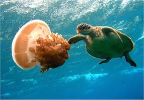 Jellyfish Munch