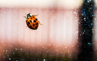 The Ladybug by gravedesires777