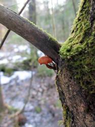 Mini mushroom by Hattmannen