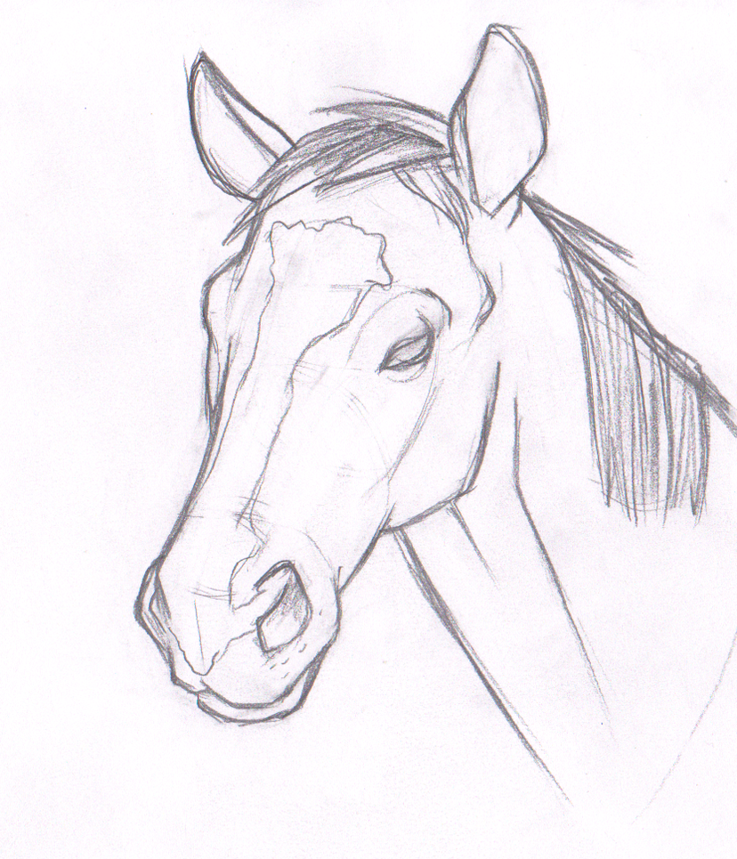 How To Draw A Horse Head Horse Head Sket...