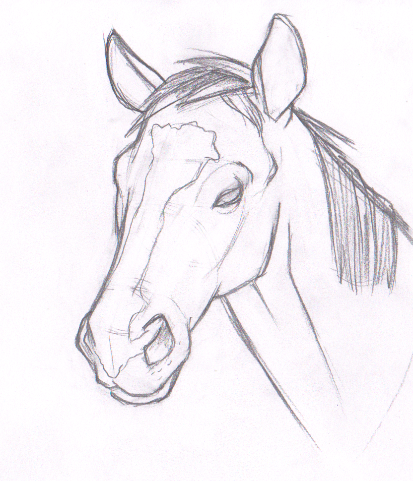 D Line Drawing Easy : Horse head by chrisatherton on deviantart