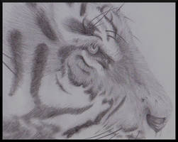 Eye of the Tiger by Rebecca1208