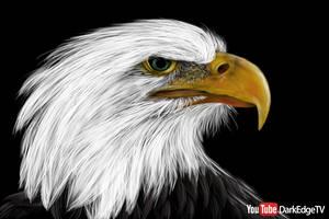 Bald Eagle by Rebecca1208