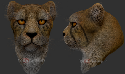 Cheetah Head Previews - ZBrush by Rebecca1208