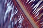 Palm leaves by Vershinina