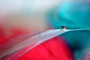 Red White Blue by AdrianaFilip