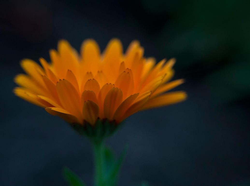 Orange yet again by AdrianaFilip