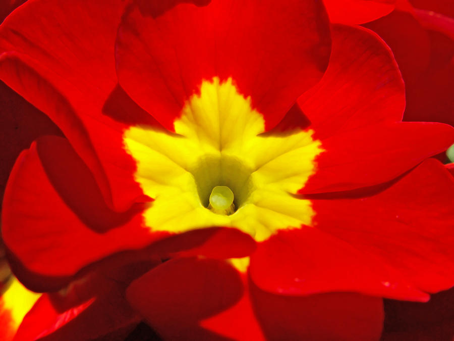 Color contrast redyellow by geanfrancois on deviantart - Contrast color with yellow ...