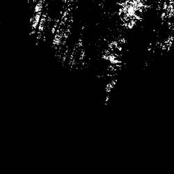 Dark forest by anul147