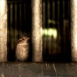 bird in prison
