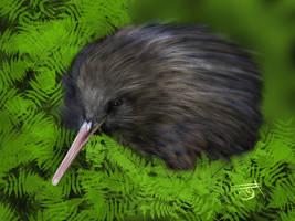 Kiwi Bird - endangered