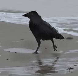 Bird on sandDV