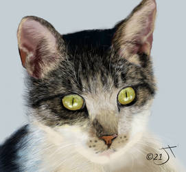 Cat by enug66