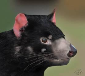 Tasmanian Devil by enug66