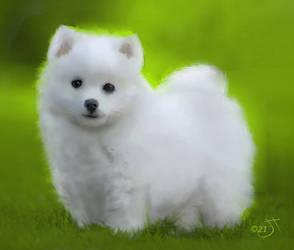 Japanese Spitz Puppy by enug66