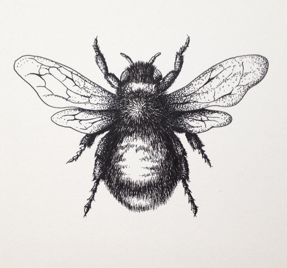 Bumblebee Insect Drawing Bumblebee Drawing by L...