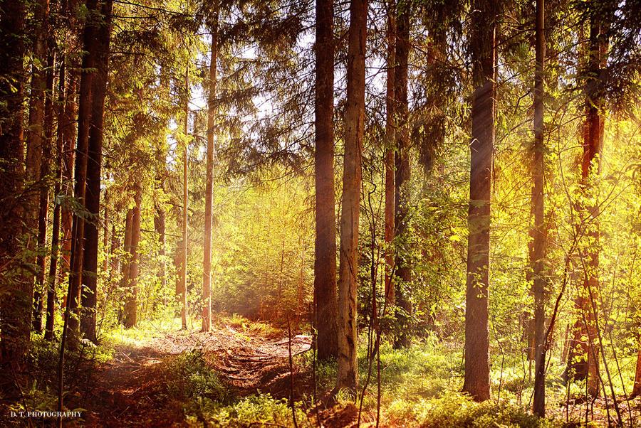 Forest 18 by orlibraorli