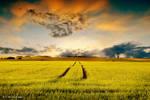 In the fields by orlibraorli