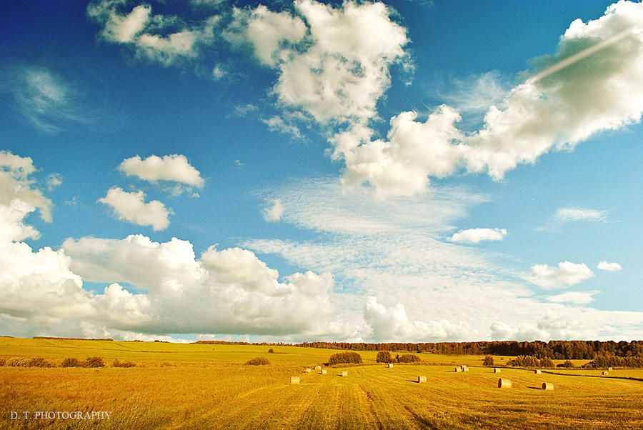 field 14 by orlibraorli