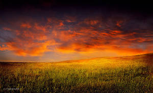 Sunset over the field by orlibraorli