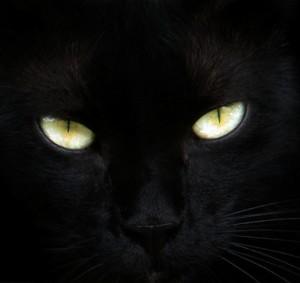FadingCrow's Profile Picture