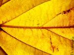 yellow leaf veins by EliValenzuela
