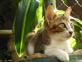 Kitten in the greens by brian-1111