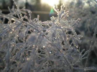 frost in the sun
