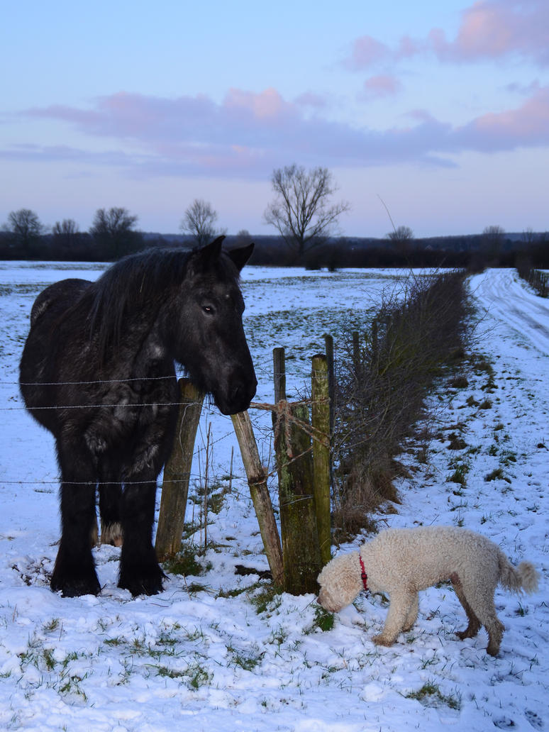 New Friend by MarieLoup