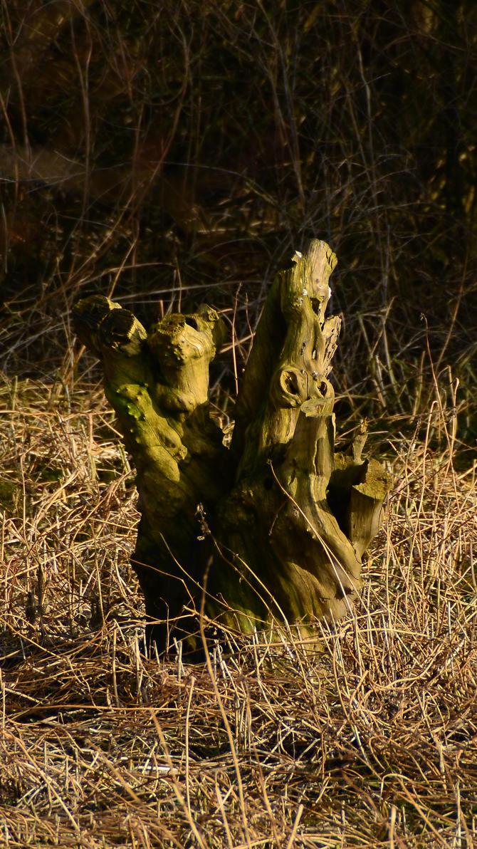 Stump by MarieLoup