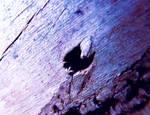 Blue wooden heart