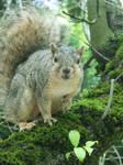 Friendly Squirrel Stock