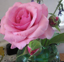 pink roses stock by thiselectricheart