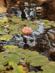 waterlily pond stock by thiselectricheart