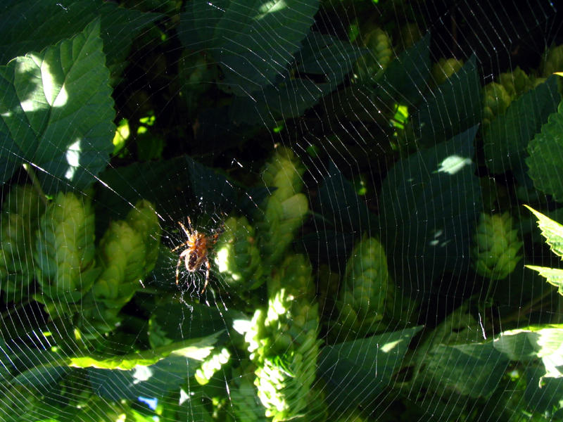 spider web by thiselectricheart
