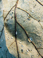 wet leafy detail by thiselectricheart