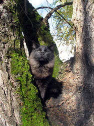 Cheshire Cat in a tree by thiselectricheart