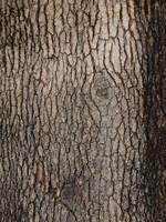 Tree Bark texture 2 by photographyflower