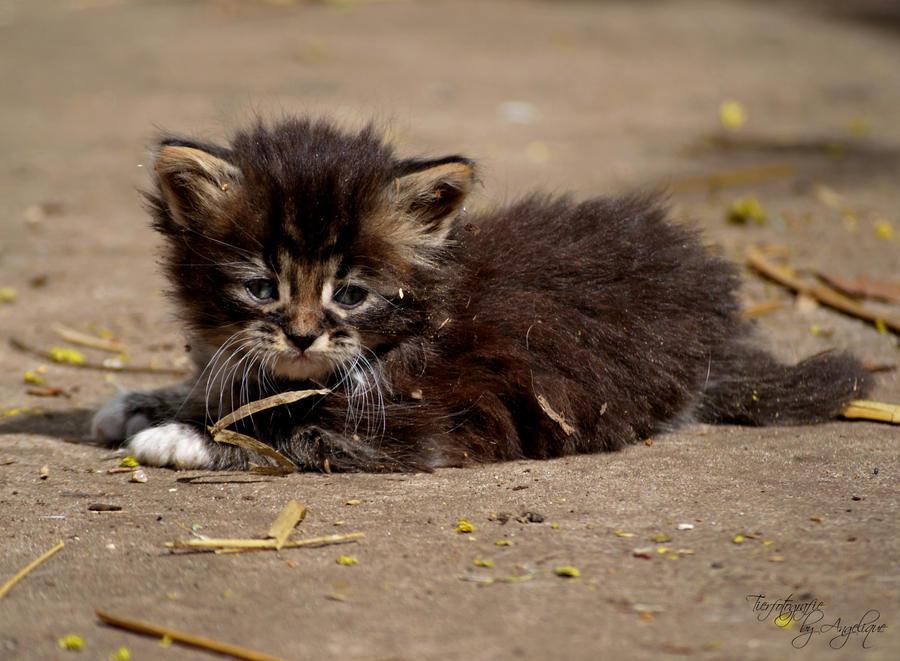 Maji svatki za gnjaviti...[Ne zamerite mi...] Here_kitty_kitty_kitty_by_AngeliqueLiebner