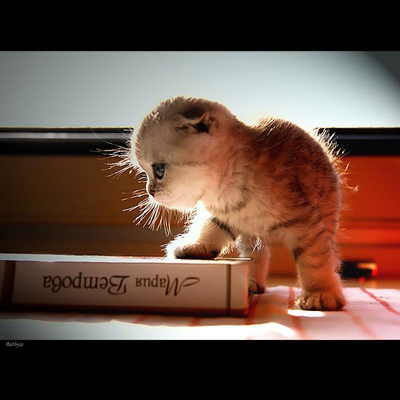 morning reading by Bobbyus