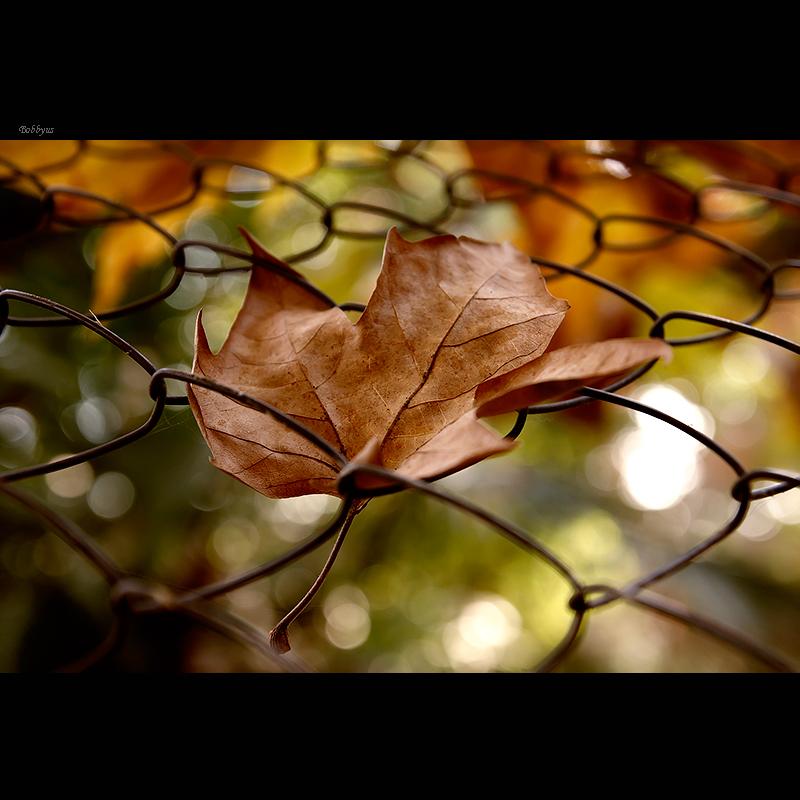 fallen leaf by Bobbyus