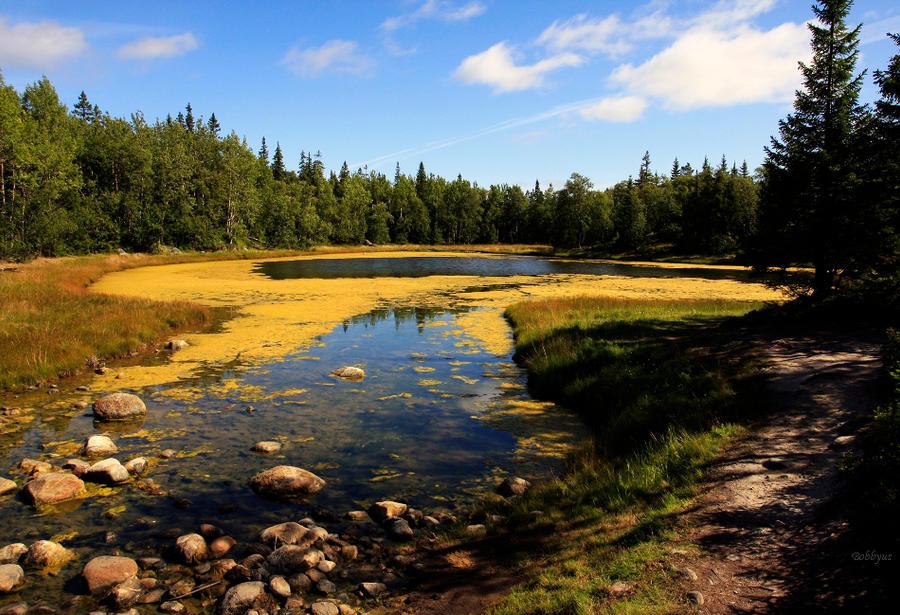 forest lake by Bobbyus
