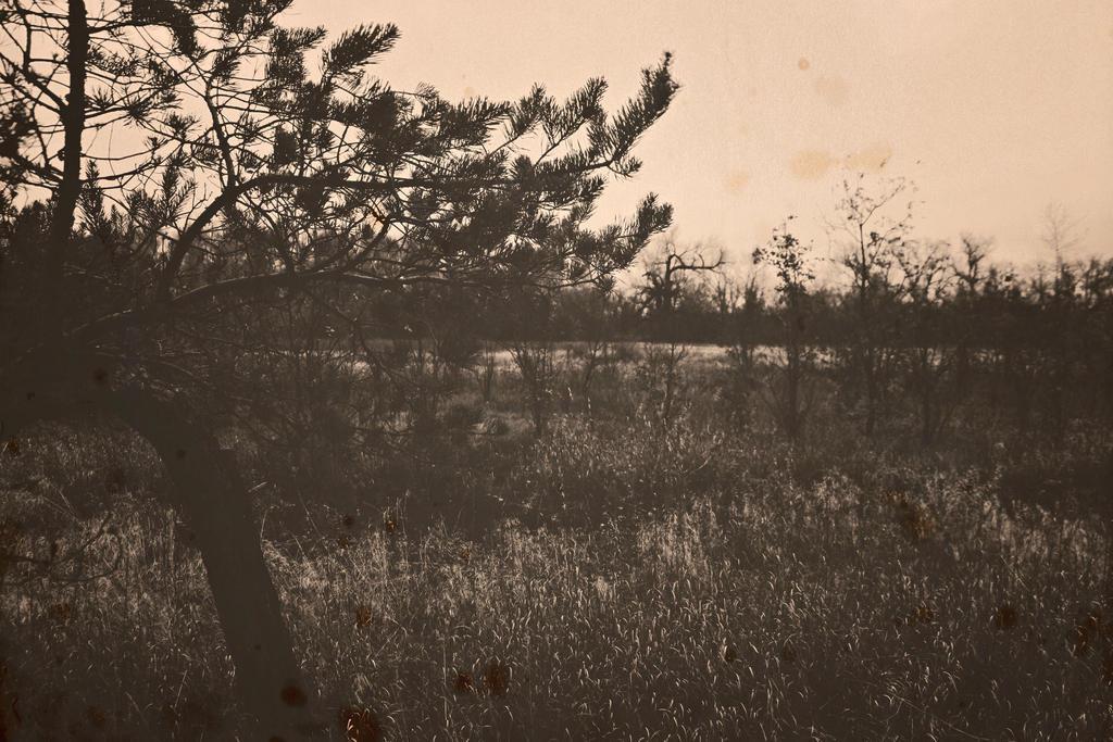 Autumn forest.17.3 by Bobbyus