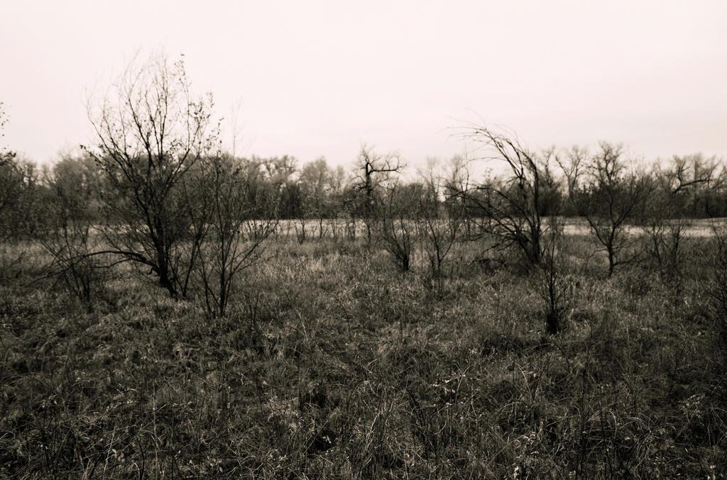 Autumn forest.18 by Bobbyus