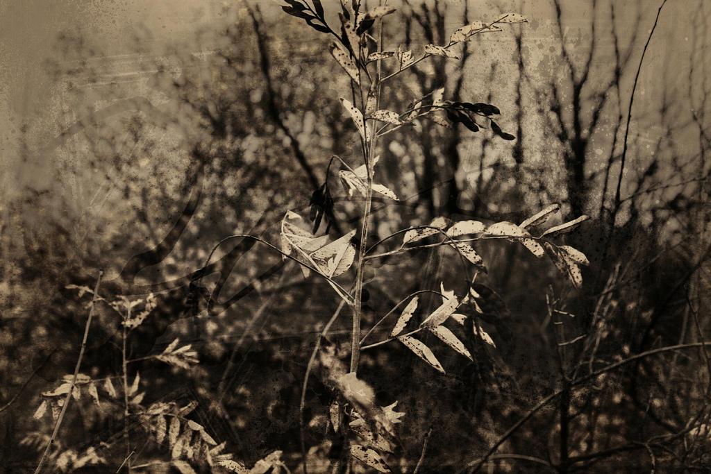 Autumn forest.19 by Bobbyus