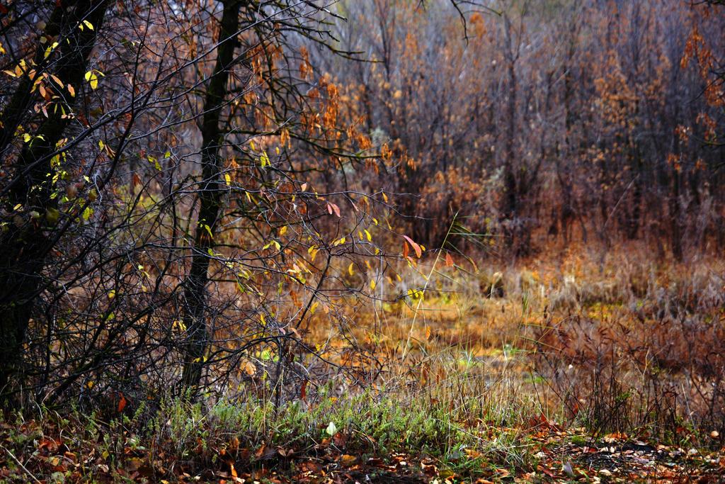 Autumn forest.20 by Bobbyus