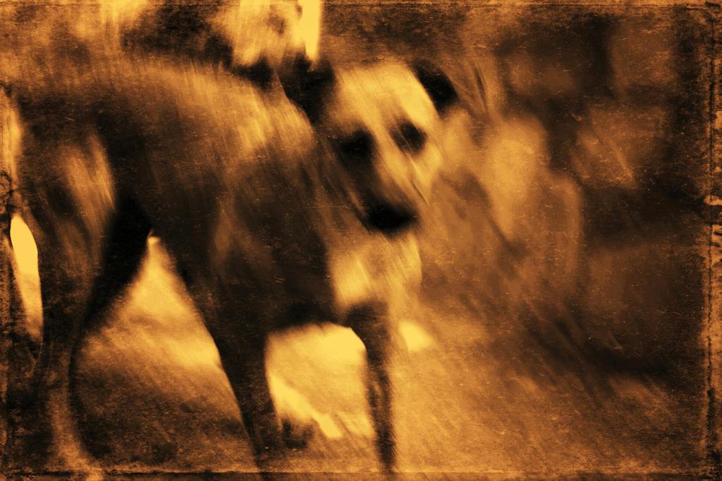 Puppy by Bobbyus