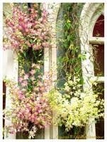 Dendrobium by yuzukko