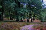 Lueneburger Heide / Germany