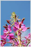 Flower by brantgarde
